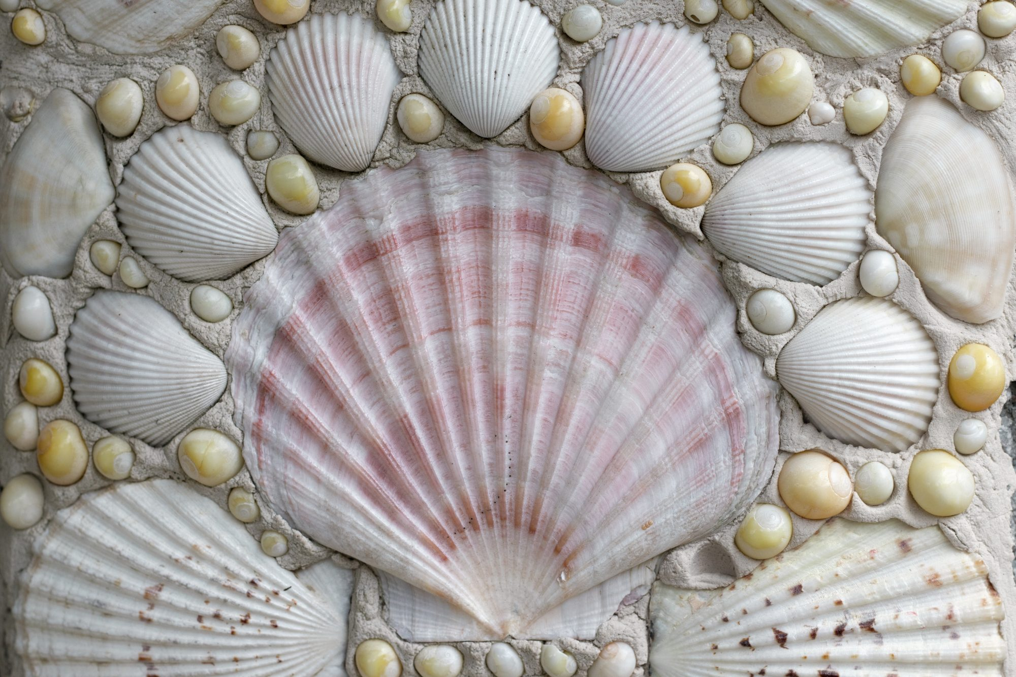 Mosaic made from shells