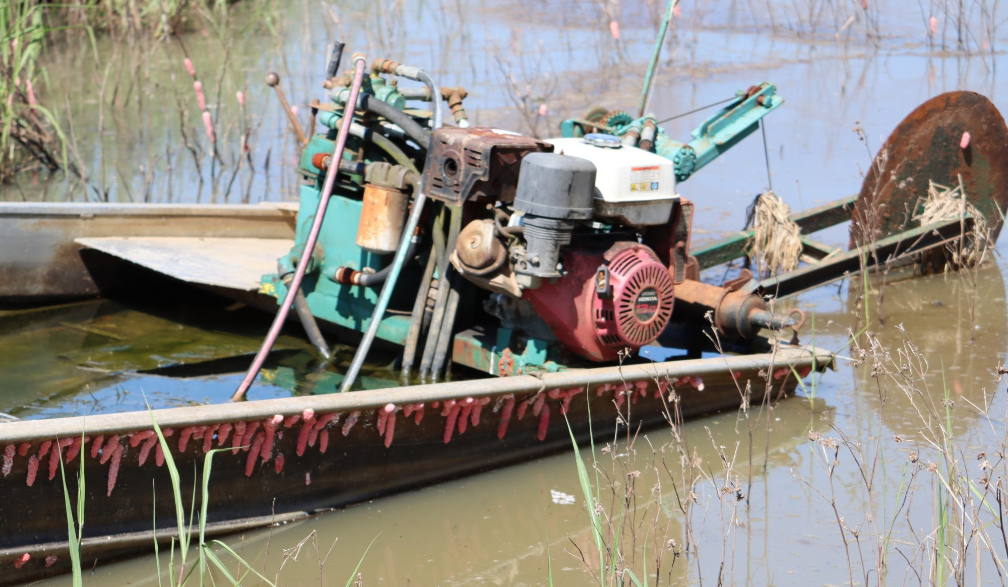 Crawfish Boat with Apple Snail Eggs