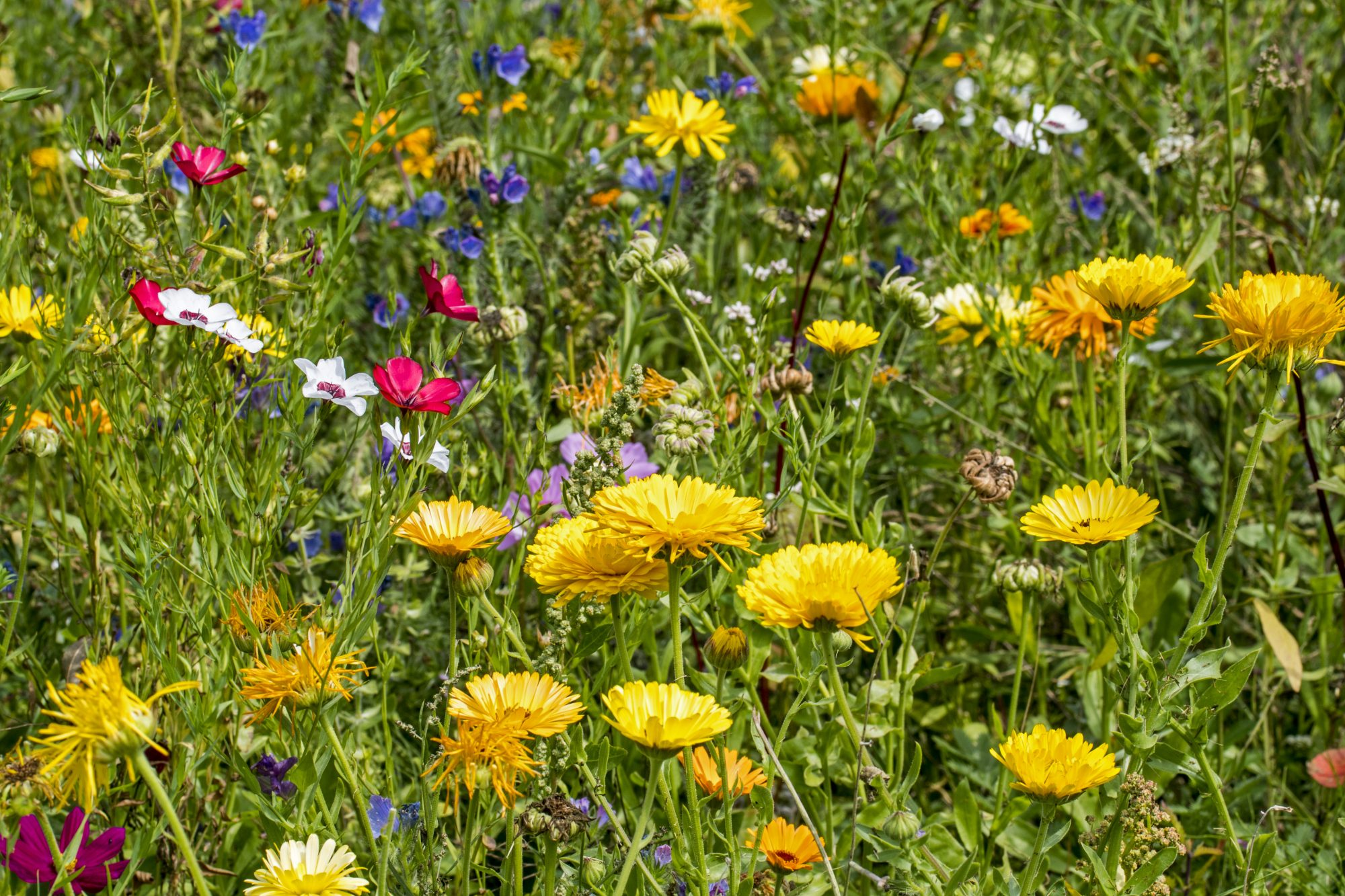 Mixture of colorful wildflowers