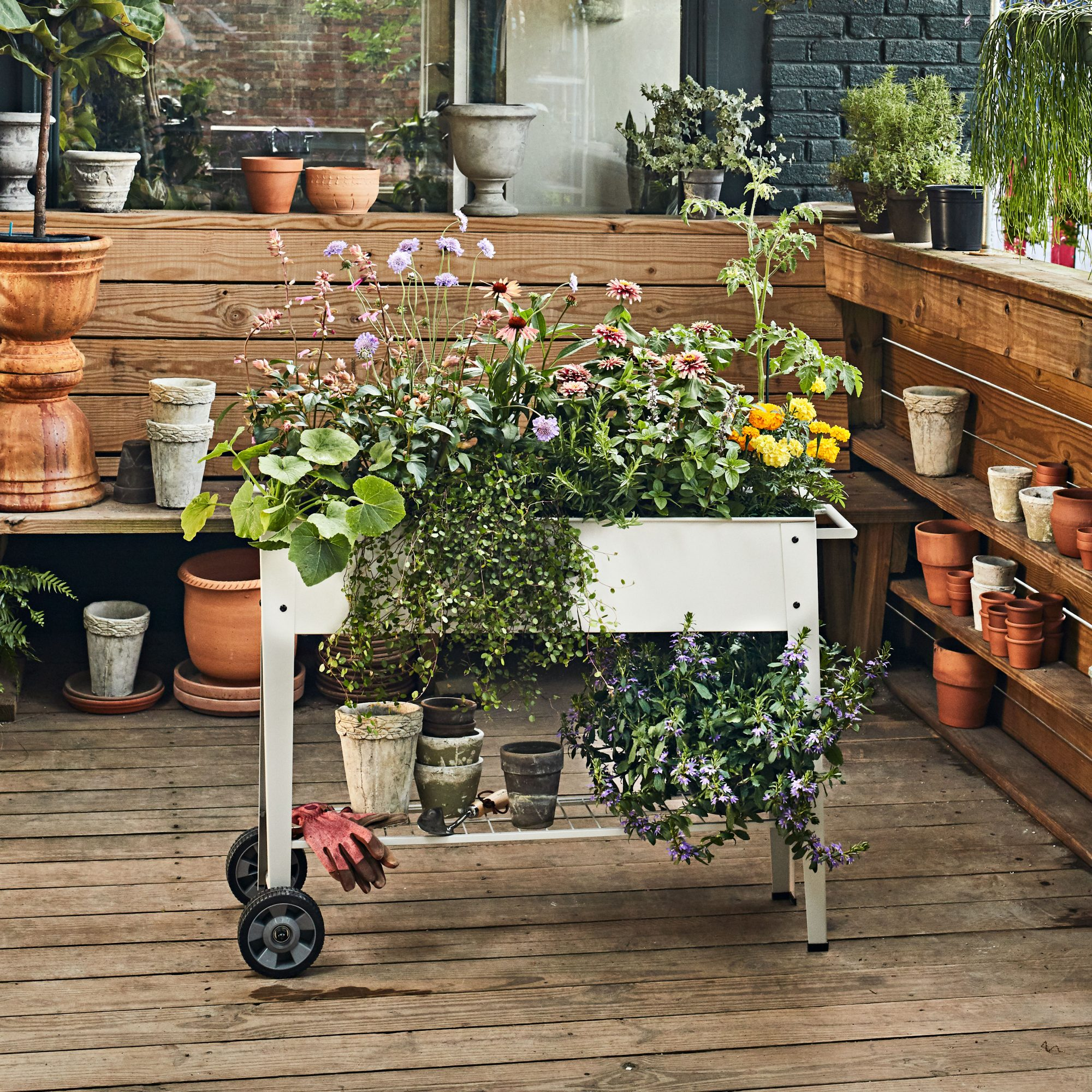 Rolling cart container garden with zinnias and marigolds