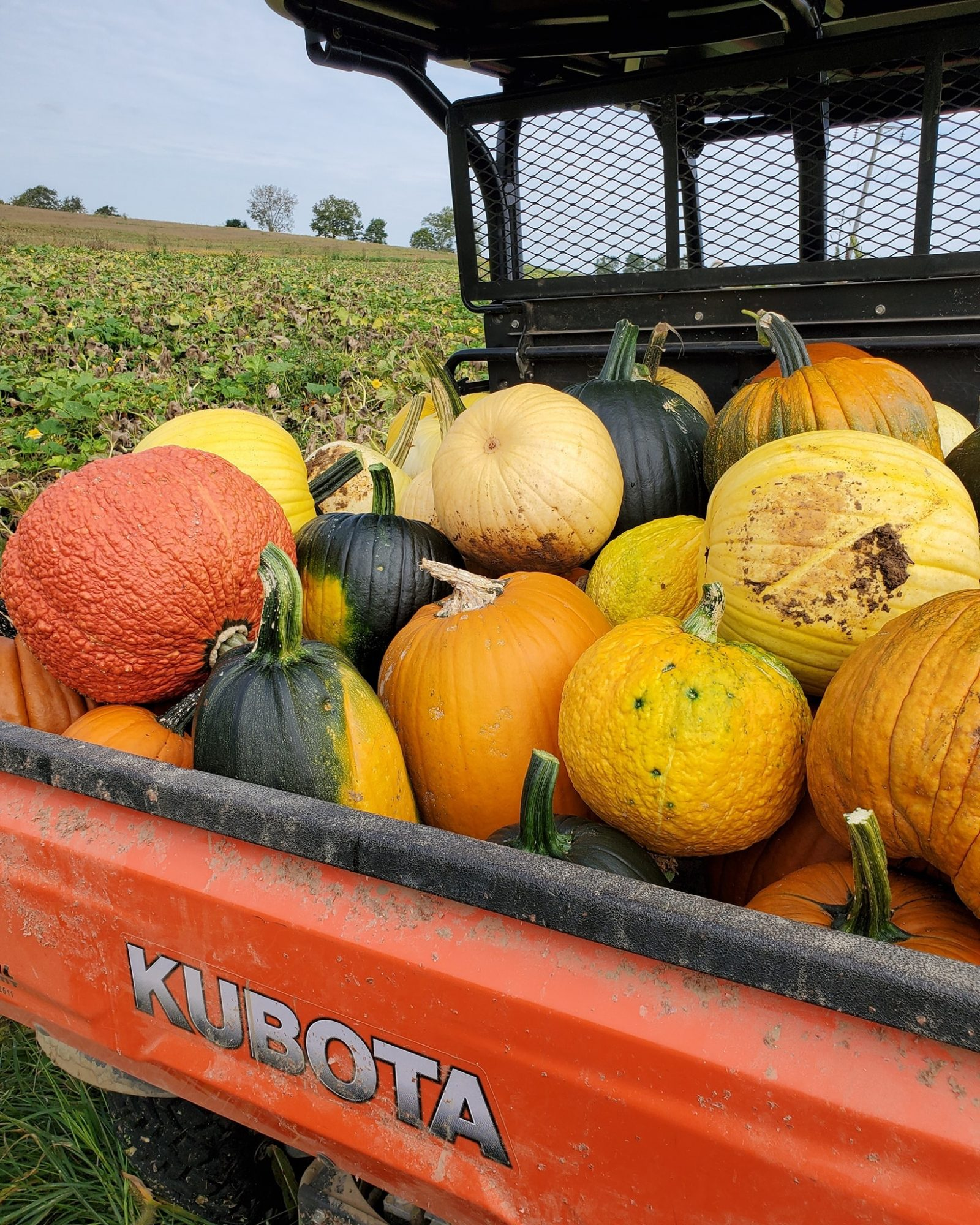 Pumpkins and Assorted Gourds in a Red Tractor Bed