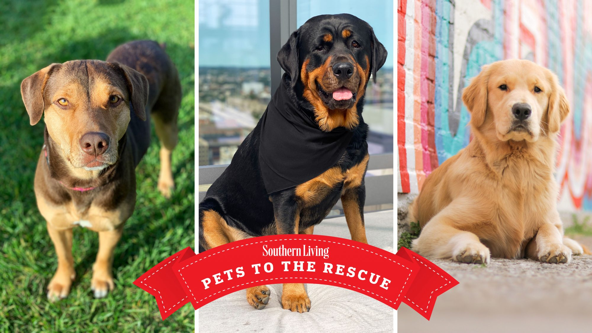 Pets to the Rescue 2021
