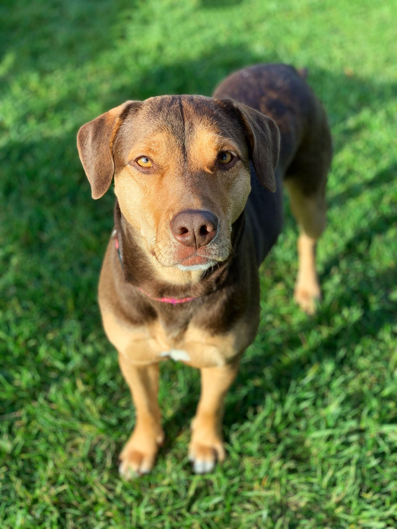 Pets to the Rescue 2021: Shelby