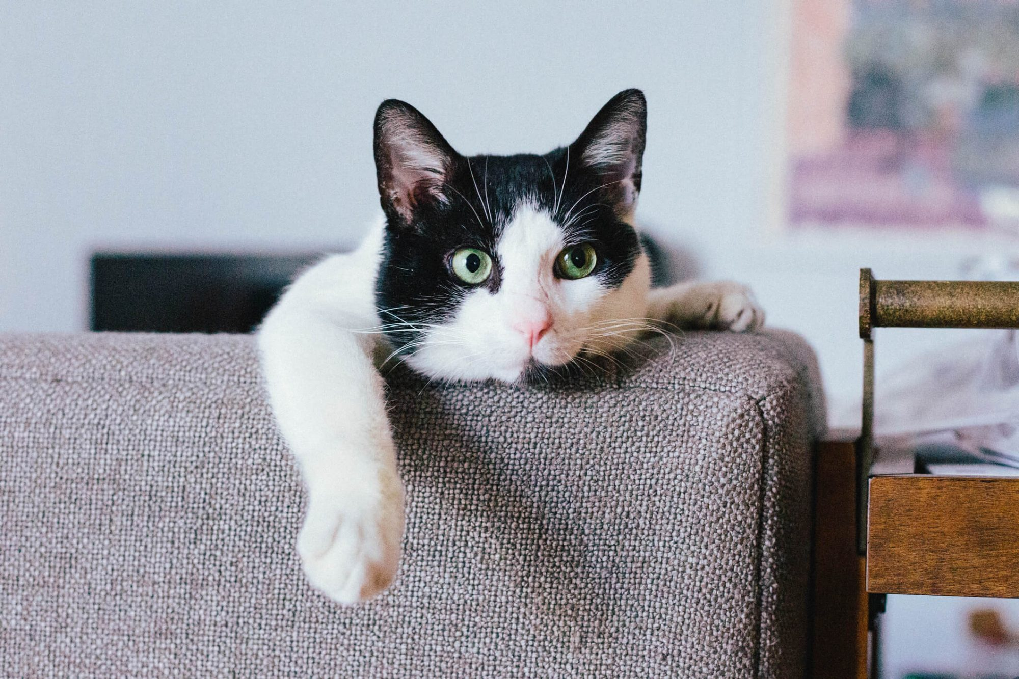 cat laying on couch looking at camera