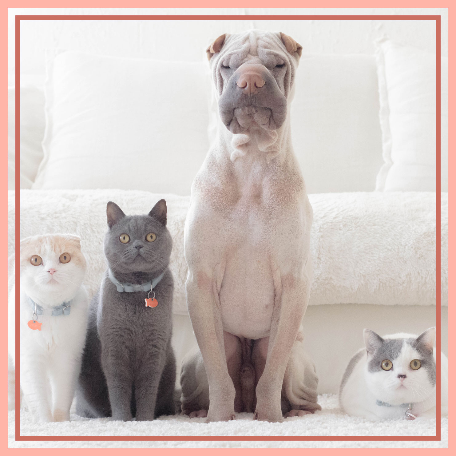 The Best Housekeeping Products for Pet Owners