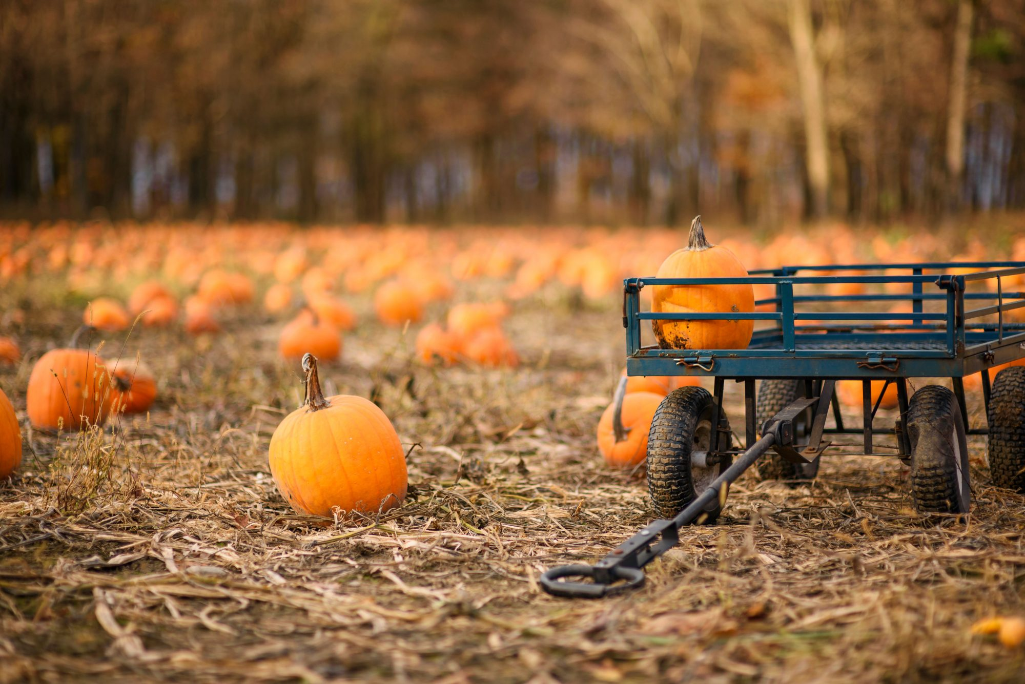 Pumpkin Patch with Wagon