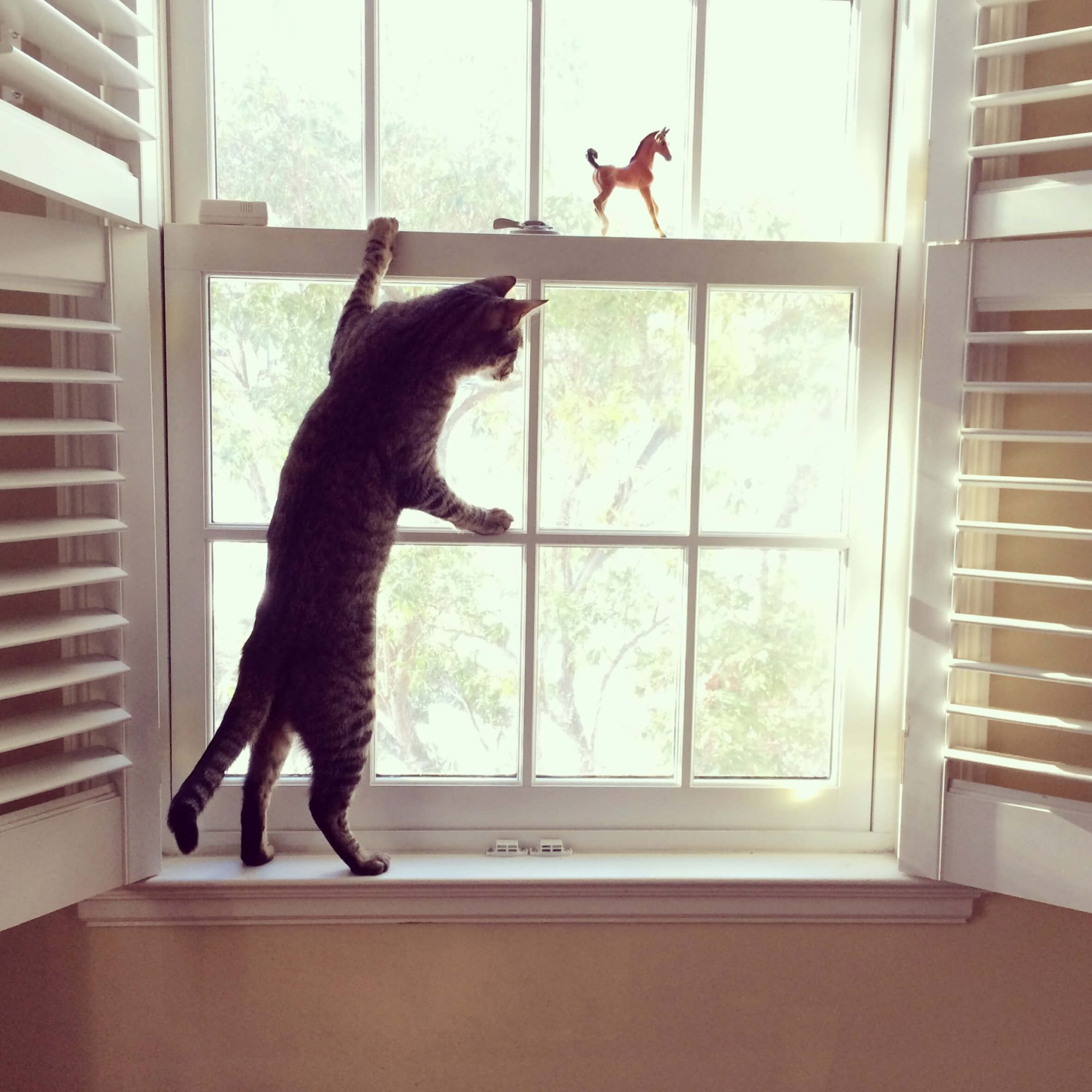 cat standing at a window