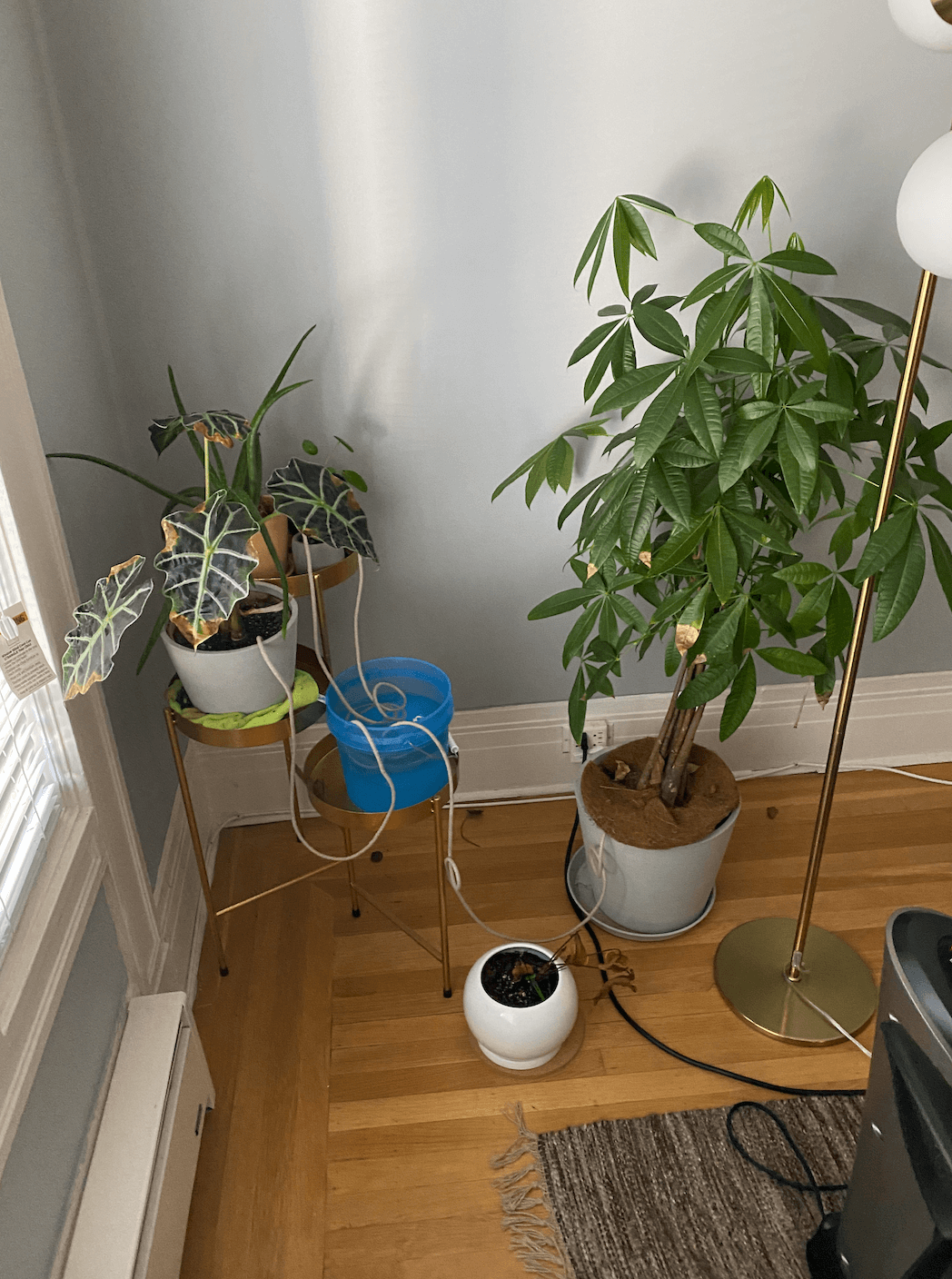 how to water plants on vacation using cotton rope