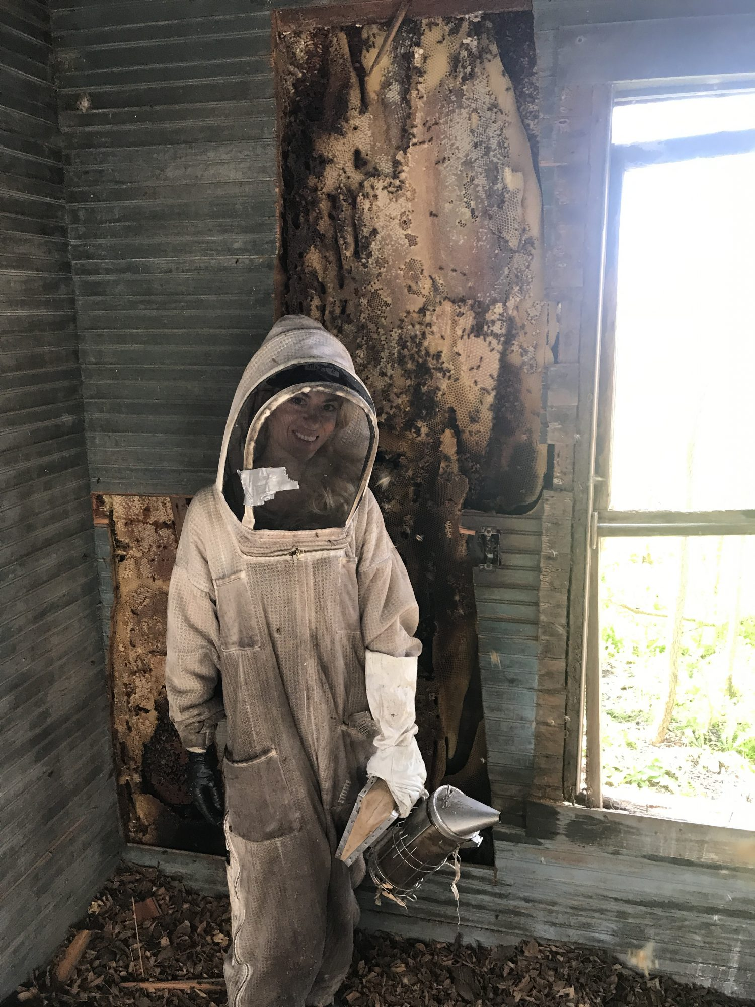 Texas Beeworks, bee removal