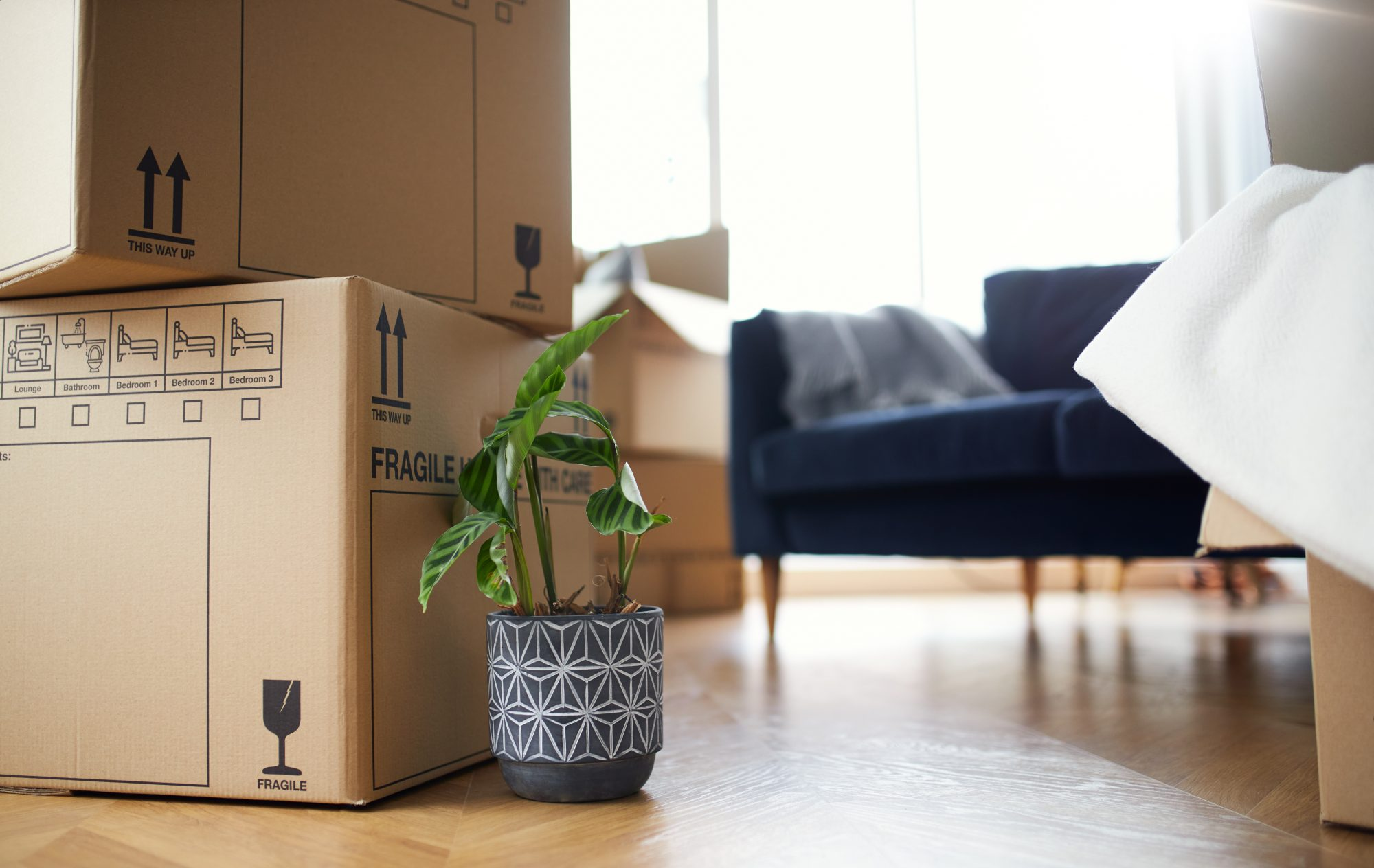 A green plant in a navy blue planter on the wooden floor of a home near large cardboard moving boxes.
