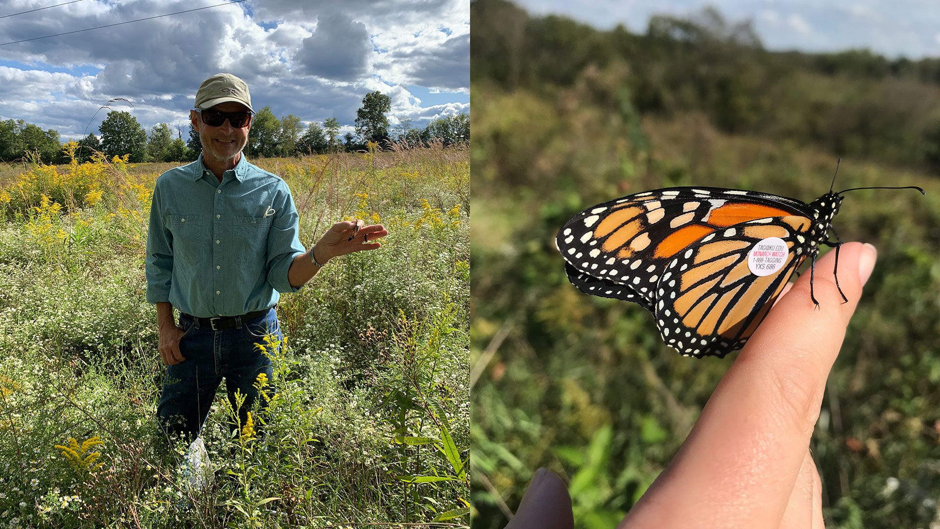 Monarch Butterfly Tagged Tri Roberts