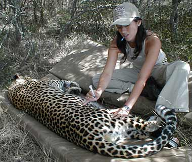 Best Save-the-Earth Trips: South African wildlife preservation