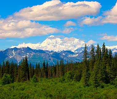 The World's Most Pristine Forests: Denali National Park and Beyond, Alaska and Canada