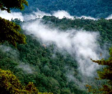 The World's Most Pristine Forests: Kayan Mentarang National Park, Indonesia
