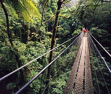 The World's Most Pristine Forests: Santa Elena and Monteverde Cloud Forest Reserves, Costa Rica