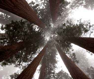 The World's Most Pristine Forests: Sequoia and Kings Canyon National Parks, California