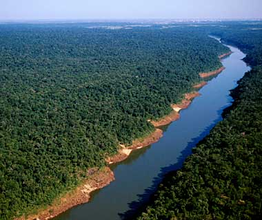 The World's Most Pristine Forests: Upper Paraná Atlantic Forest, Argentina, Paraguay, and Brazil