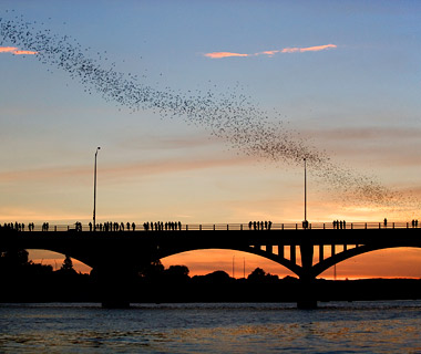 Ann Richards/Congress Avenue Bridge, Bats, Austin, Texas
