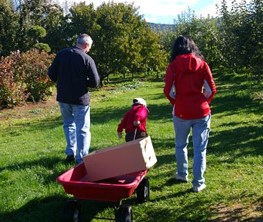 Kiyokawa Family Orchards, Parkdale, Oregon