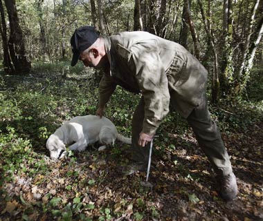 Truffle hunting in Croatia (SeaDream)