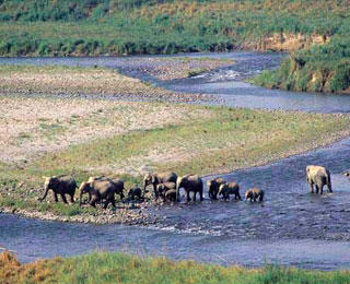 India's Best Wildlife Safaris
