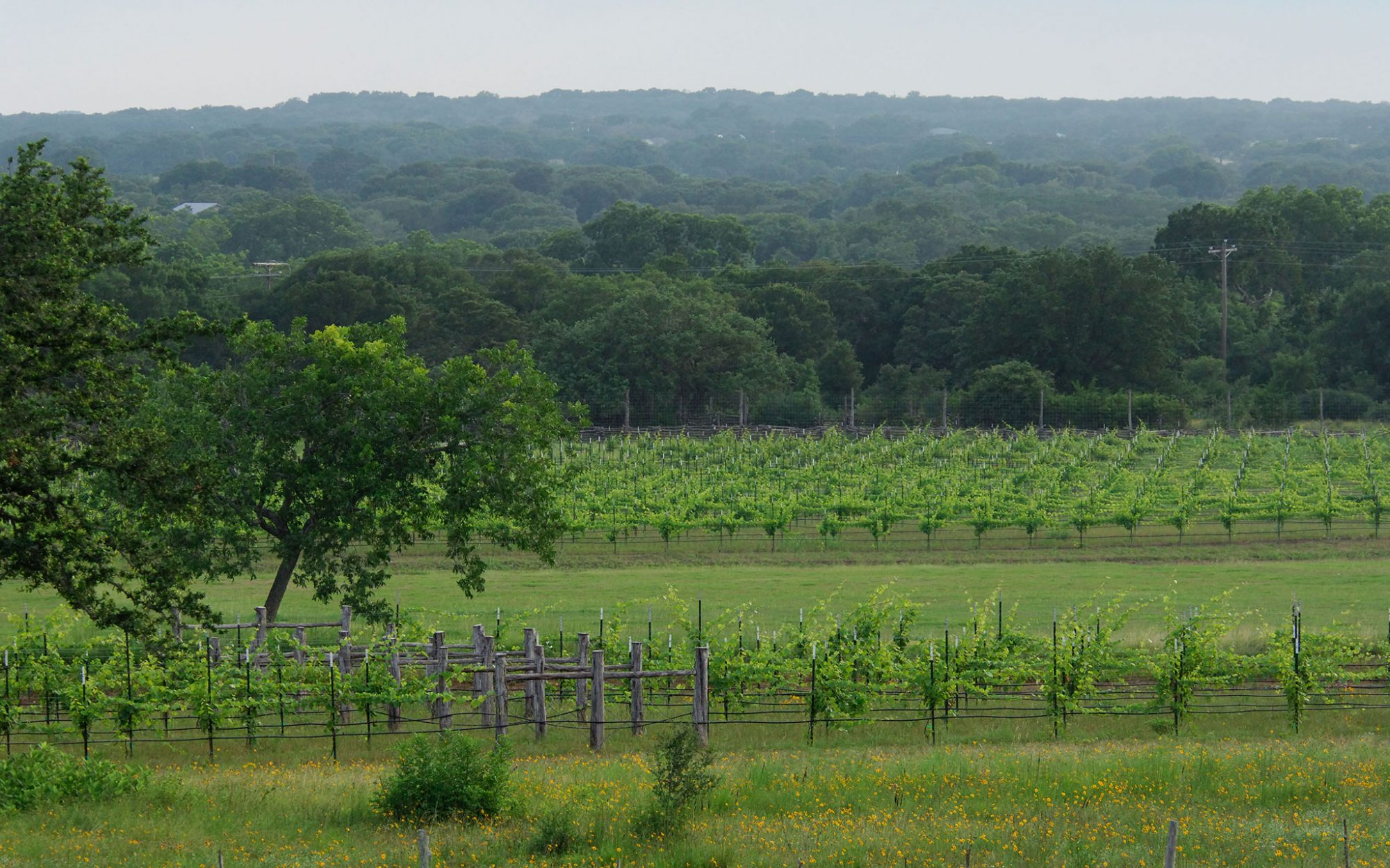 10 Unexpected U.S. Wine Trails: North Central Texas