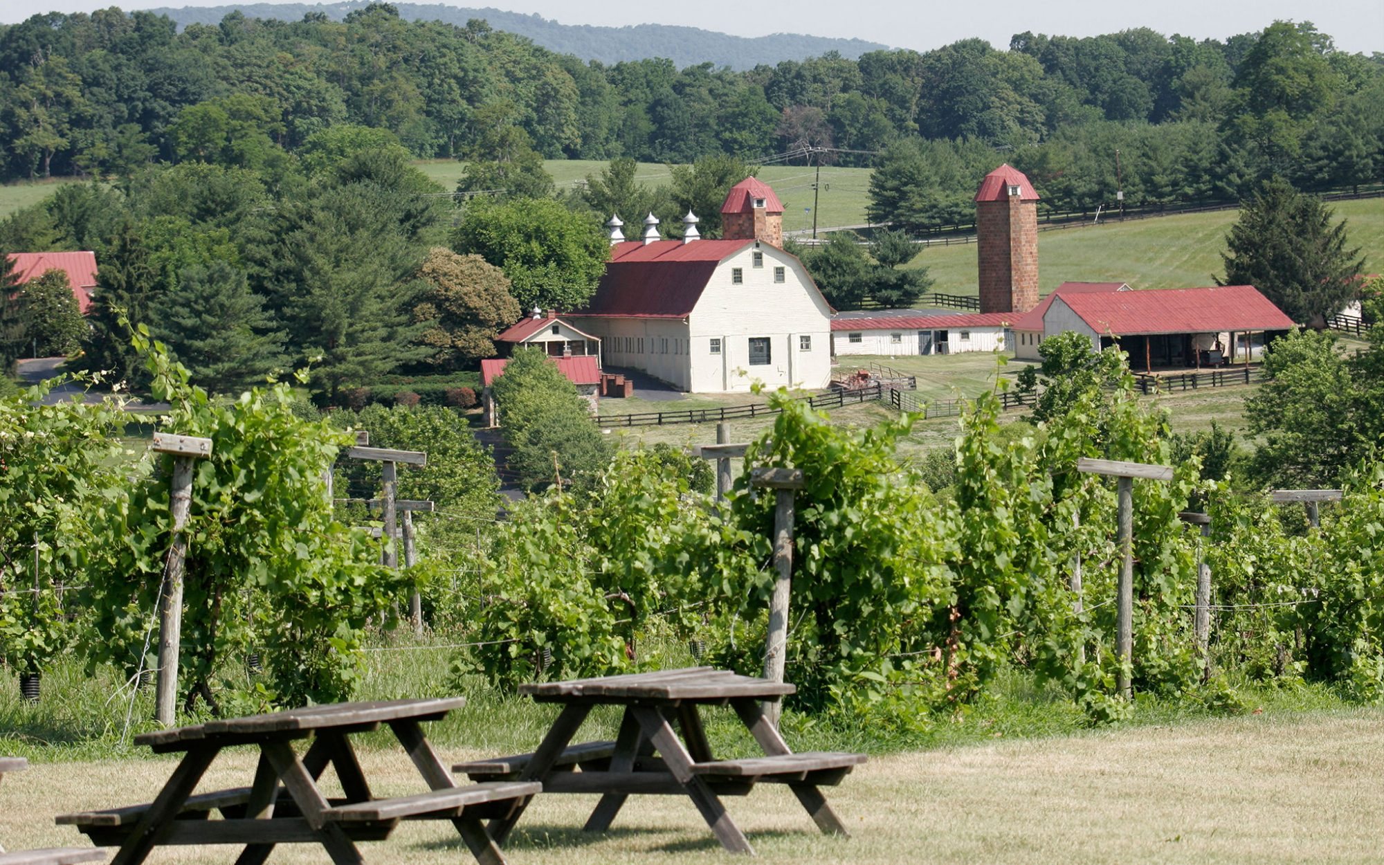 10 Unexpected U.S. Wine Trails: Northern Virginia
