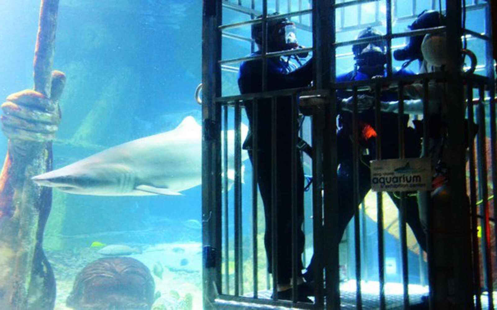 World's Strangest Places to Get Married: Shark Tank