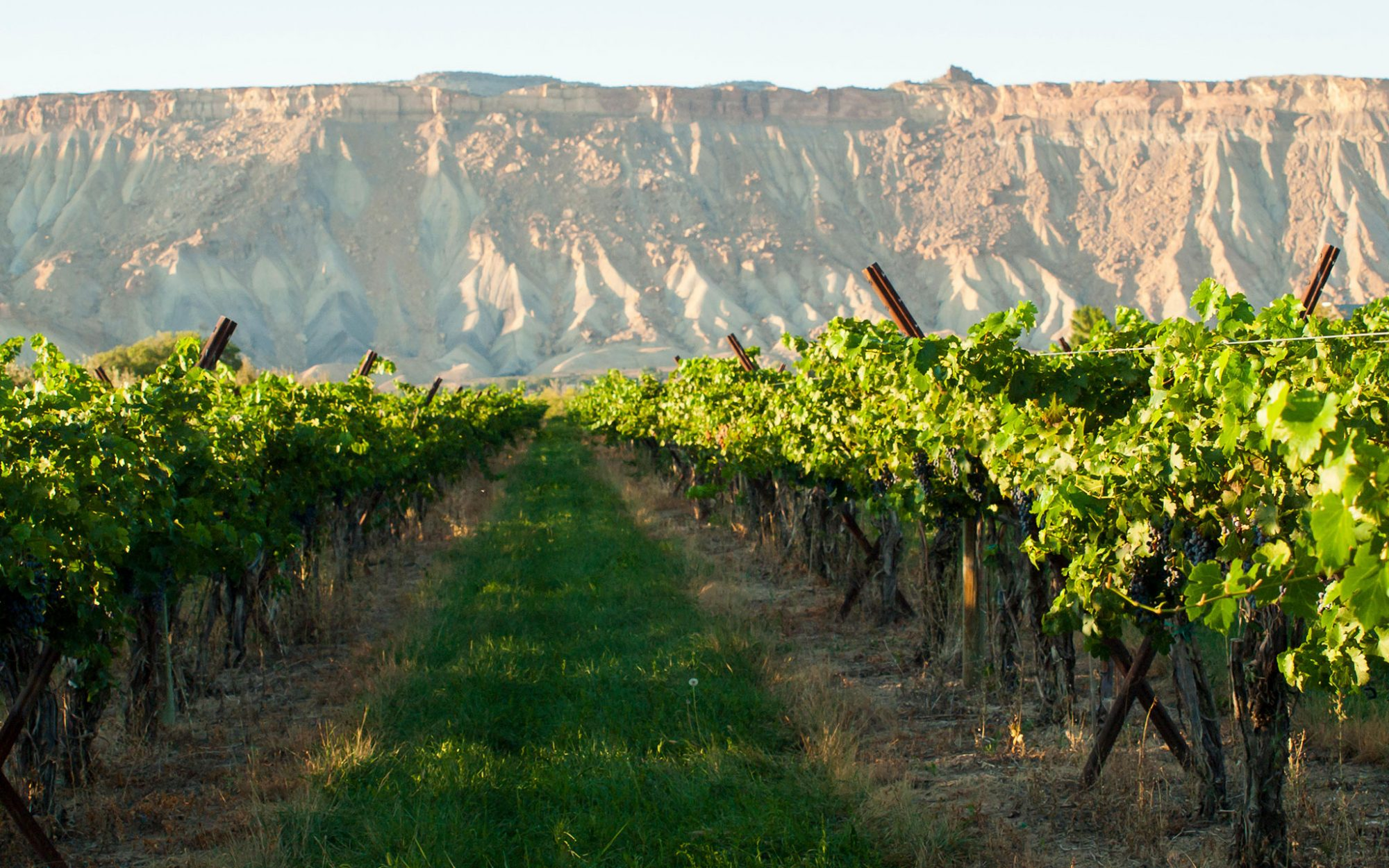 10 Unexpected U.S. Wine Trails: Western Colorado