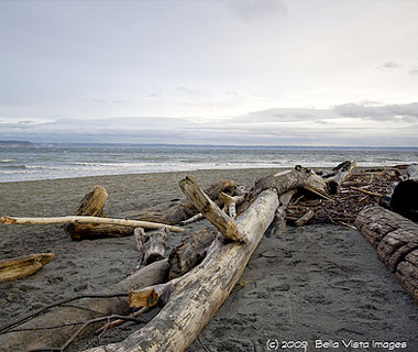 10 Best U.S. Shelling Beaches: Point No Point Beach Hansville, WA