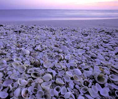 10 Best U.S. Shelling Beaches: Sanibel Island, FL