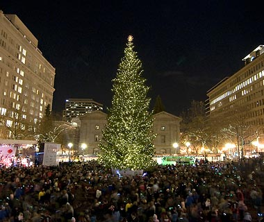 Portland's Christmas Tree at Pioneer Square