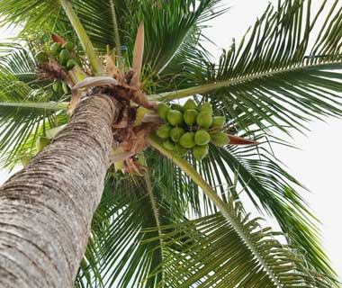 Coconut Safety Engineer