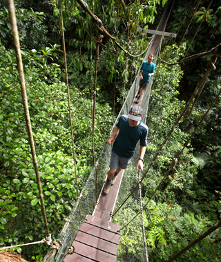 Tree Top Canopy Walk, Borneo