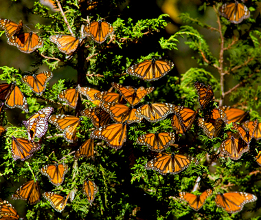 201107-w-migrations-butterfly