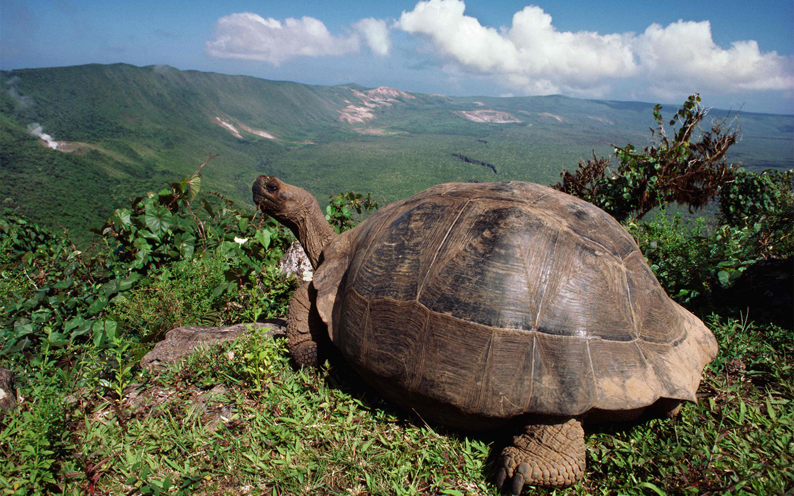Best Life-Changing Trips: Wildlife Expeditions in the Galapagos