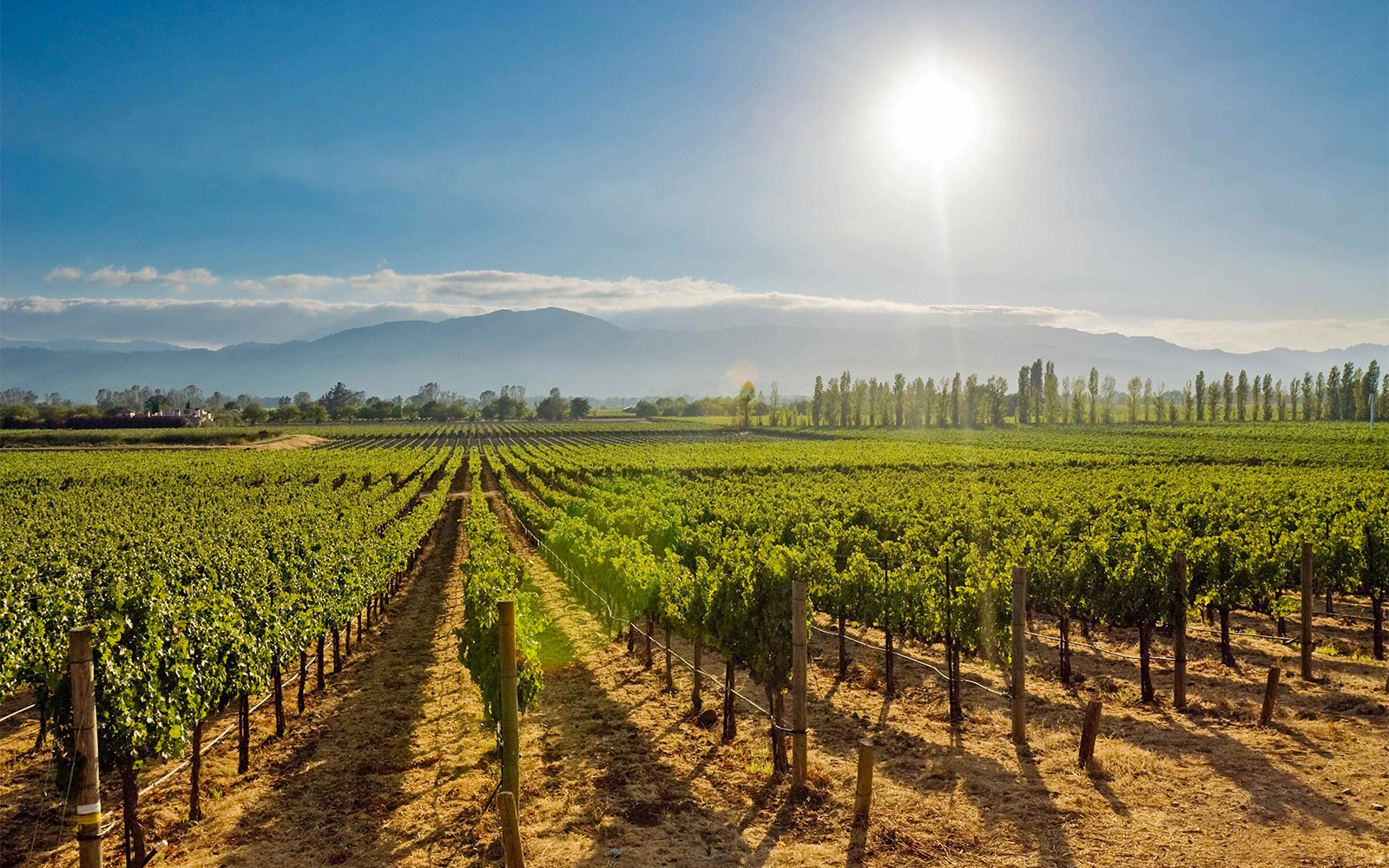 Best Life-Changing Trips: Wine Tasting in Napa Valley, CA