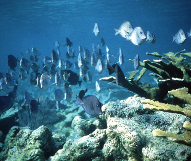 World's most endangered sites: Belize Barrier Reef