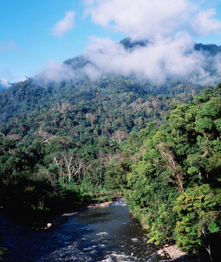 World's most endangered sites: Tropical Rainforest Heritage of Sumatra, Indonesia