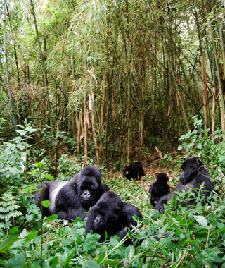 World's most endangered sites: Congo: Virunga National Park