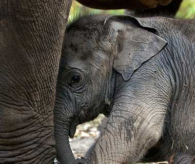 baby animals: Elephant