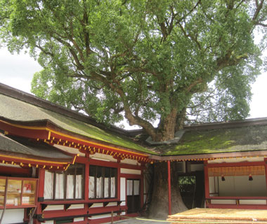 World's Most-Visited Sacred Sites: Dazaifu Tenmangu