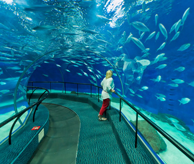 coolest underwater attractions: Shanghai Ocean Aquarium