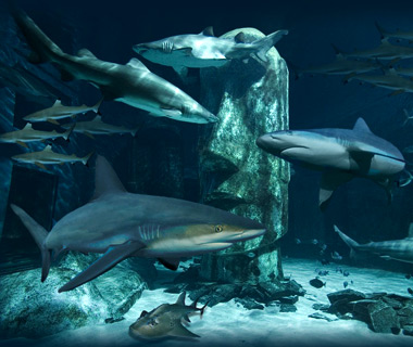 London's coolest new attractions: Shark Reef Encounter at the London Aquarium