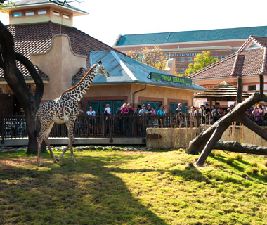 America's Most-Visited Zoos: Houston