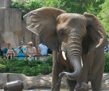America's Most-Visited Zoos: Milwaukee County