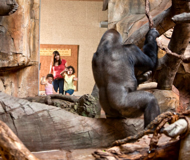 America's Most-Visited Zoos: Omaha's Henry Doorly Zoo