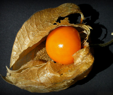World's Weirdest Exotic Fruits: physalis