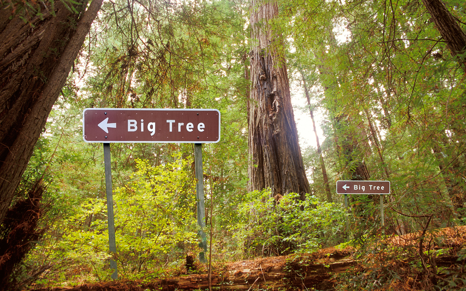 Funny Signs from Around the World: big trees