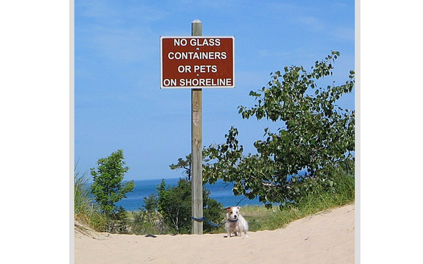 Funny Signs from Around the World: no dogs